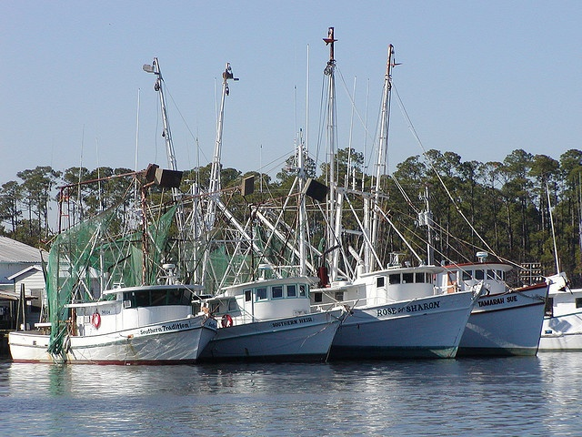 50 best images about road trip no 9 gulf coast birding for Fishing in mobile al