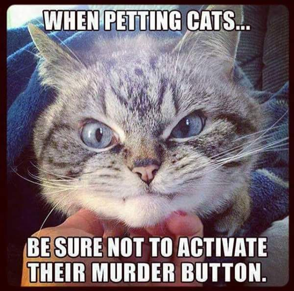 Collection Of Funny Cat Memes 2019 Cat Memes Clean Funny Friend Memes Funny Cat Pictures