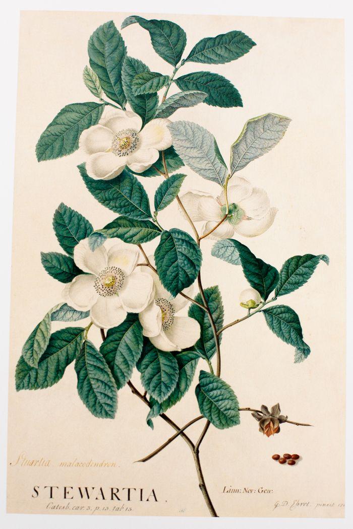 botanical prints, especially fruit