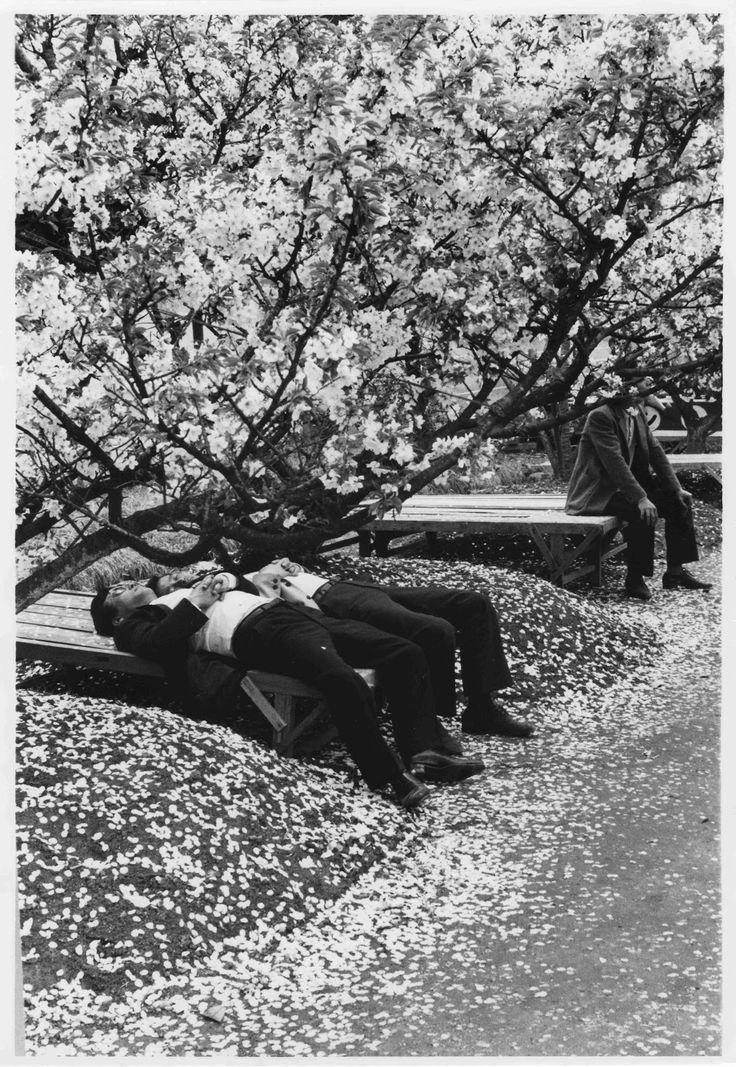"""from """"京の都 井上青龍 / kyo no miyako"""" photobook, 1960-1970s by seiryu inoue"""