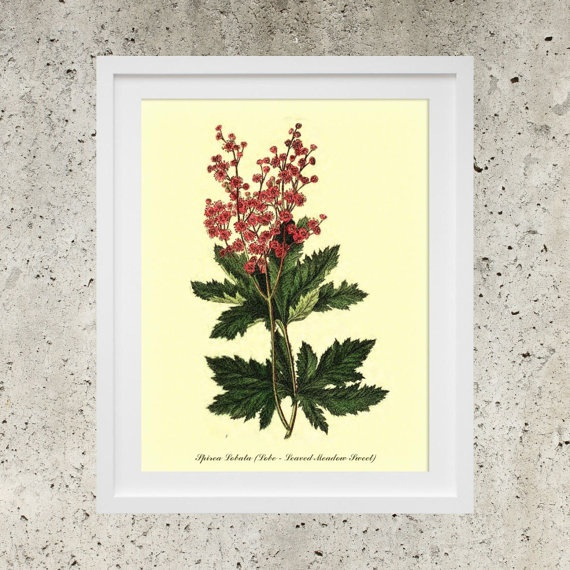 Poster Download   Botanic Garden Red Flowers   by DigitalBanana Lobe - Leaved Meadow Sweet