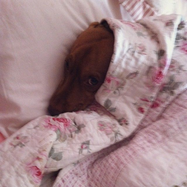 Non disturbarmi mamma, lo vedi che sto riposando no? ?