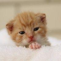 #dogalize Edad de los gatos, ¿cuántos años pueden vivir? #dogs #cats #pets
