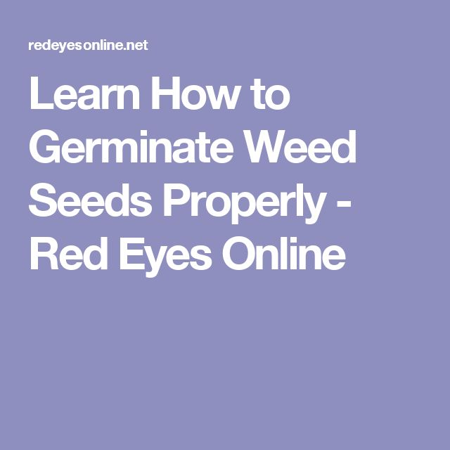 Learn How to Germinate Weed Seeds Properly - Red Eyes Online