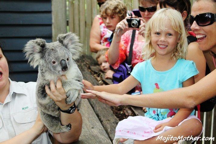 Meet a Koala - Dreamworld, Gold Coast, Australia: http://www.ytravelblog.com/how-to-visit-australia-on-a-two-week-vacation/