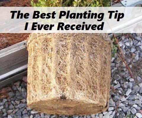 The Best Planting Tip I Ever Received