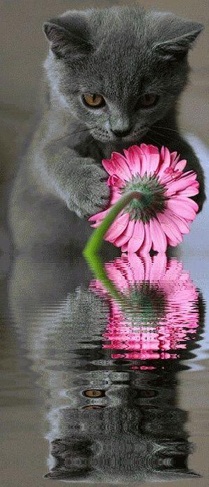 Cat Flower Reflection