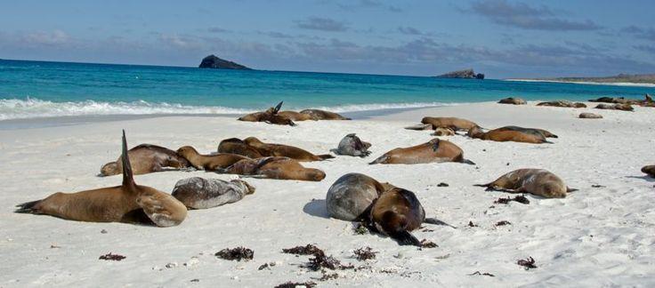 Isla Galápagos, Ecuador. | 26 Lugares impresionantes en América Latina que deberías visitar