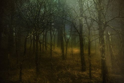 Woodland by Antonio Zaccagnino