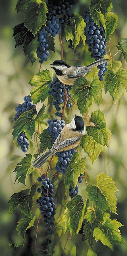 Artiste Animalier - Rosemary Millette - Mésanges sur des grappes de raisin