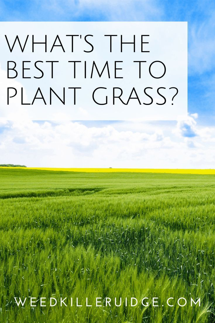 Best time to plant grass in 2020 growing grass plants