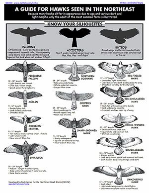 A guide for hawks seen in the Northeast (United States)