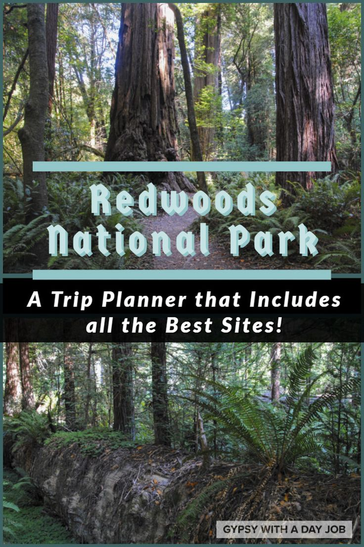 A Redwoods National and State Parks Trip Planner