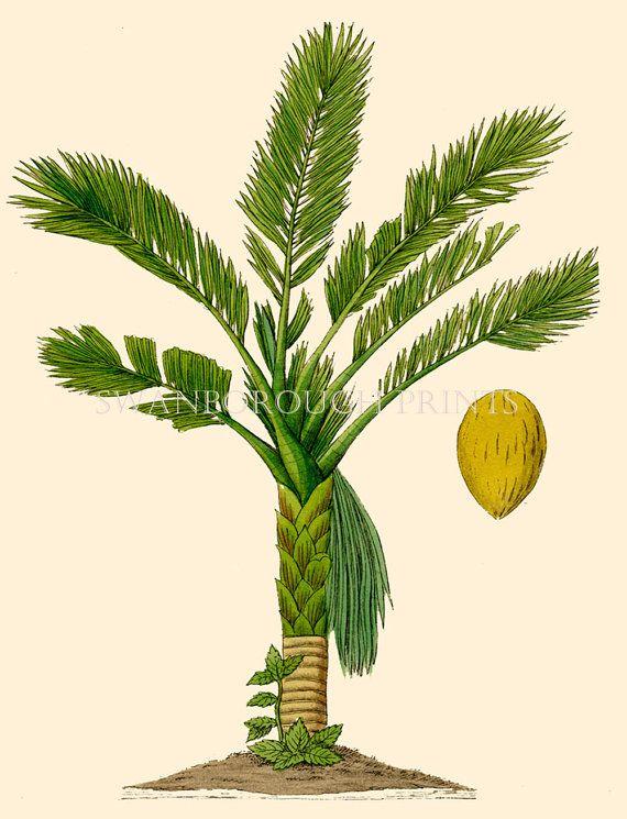 Impresión de árbol de Palma vintage. Coco Palm árbol pared
