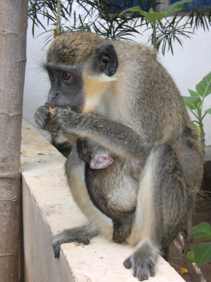 mami i baby a Gàmbia