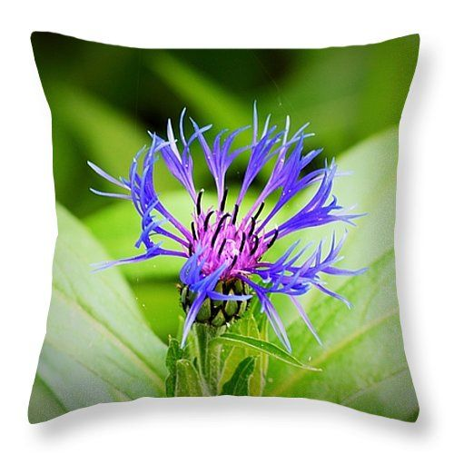 """Bachelor Button Throw Pillow 14"""" x 14"""" - Original Photo by Josh Schwindt. This looks amazing on a throw pillow, adds colour and depth to your rooms."""