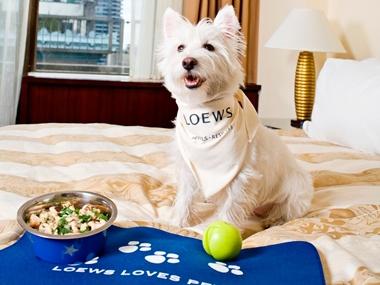 At Loews Atlanta Hotel You Must Love Dogs