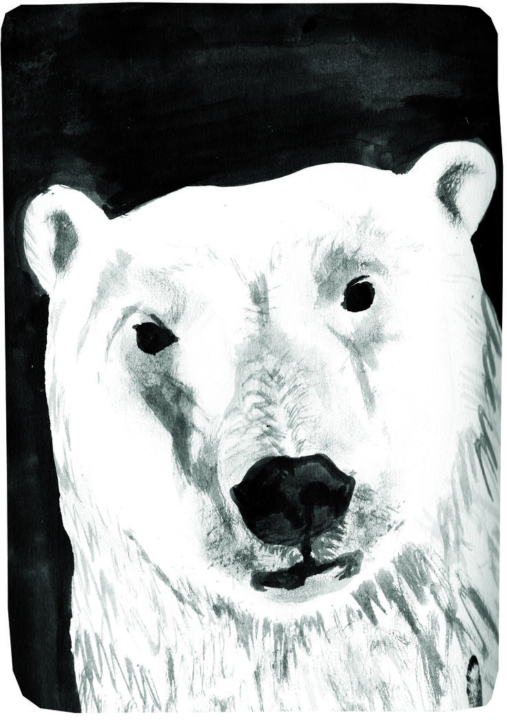 D&AD New Blood Awards- WWF Brief