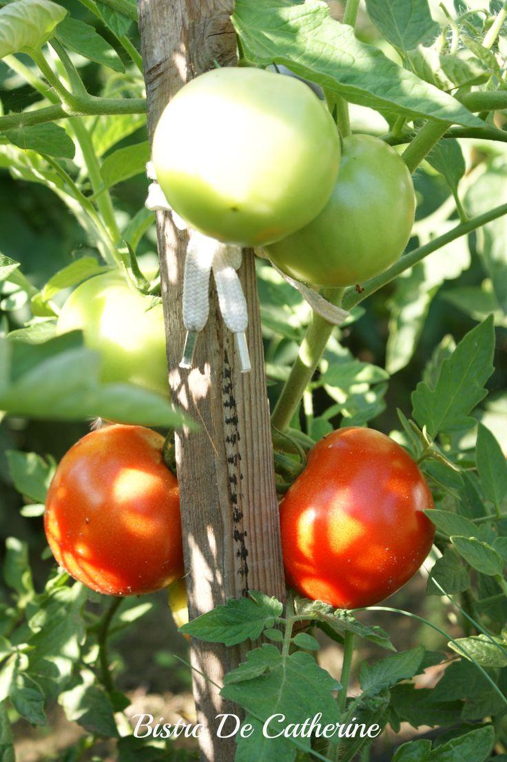 Pierwsze, własne, ekologiczne pomidory. #BistroDeCatherine