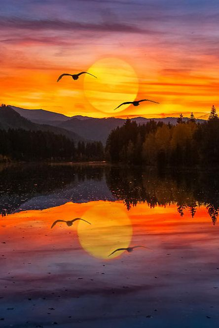 Orange sunset and flying geese reflected in the evening lake. -DdO:) http://www.pinterest.com/DianaDeeOsborne/water-of-life
