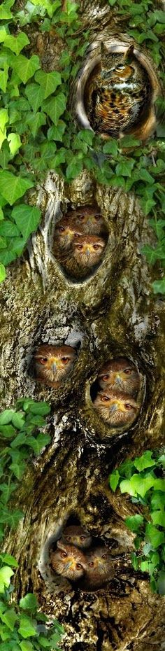 Owls...The Family Tree Google+