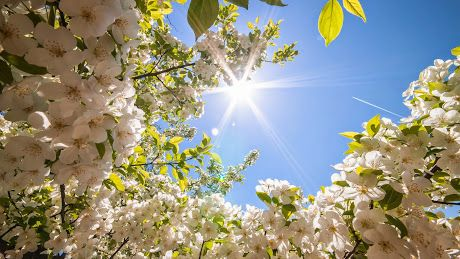 Sunshine with White Flowers images hd photos