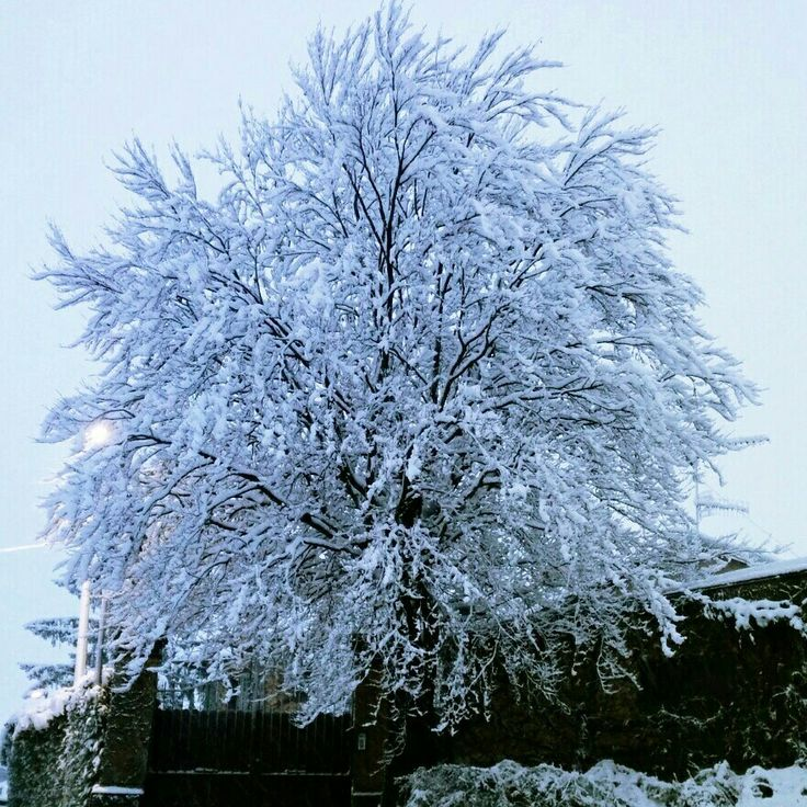 Big winter tree just outside the house
