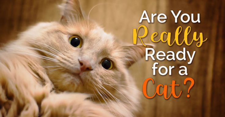5 Cat Breeds You've Probably Never Heard Of Why do cats