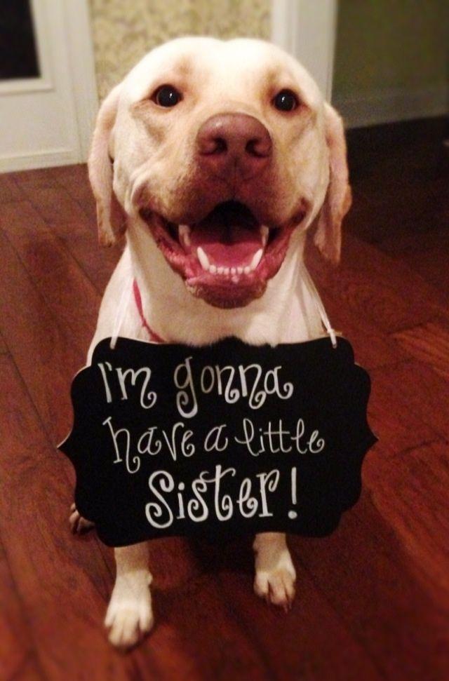 Revelacion de genero como tarjeta de invitación a baby shower con imagen de hijo mayor perruno. #InvitacionBabyShower