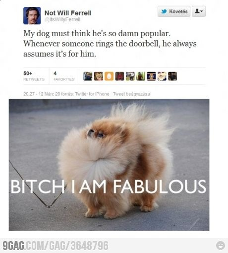 Fabulous Fur, Funny Funny, Laugh, Stuff, Awesome, Giggles