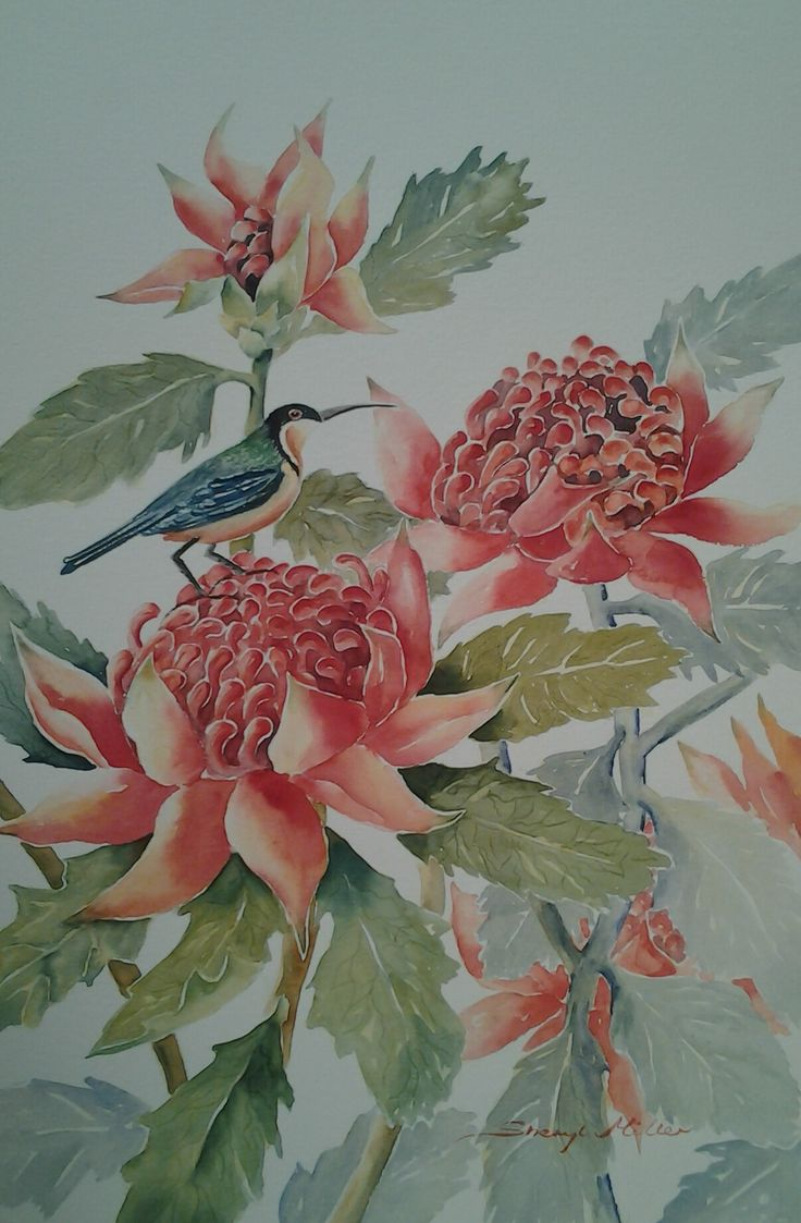 NSW Floral emblem