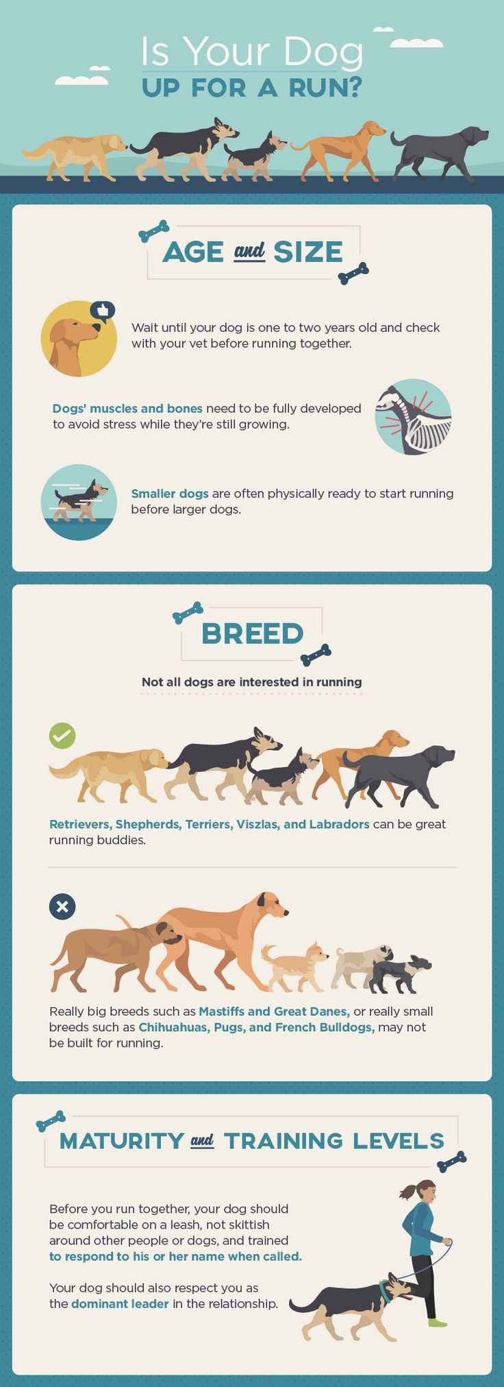 Running With Your Dog: Is Your Dog Up For a Run?