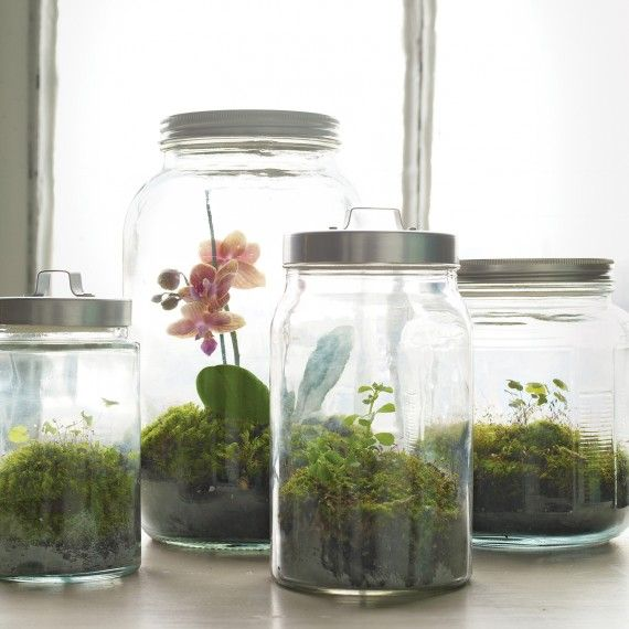 How to Make the Perfect Terrarium (and Keep It Alive!)
