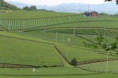 日本有数のお茶の産地である福岡県八女市でトレッキングを体験してみてはいかがでしょうか 八女中央大茶園は八女中央茶共同組合のみなさんが運営しているお茶畑 この茶畑の中をトレッキングするコースは九州観光推進機構などがすすめるトレッキングブランド九州オルレ八女コースにも選ばれています 頂上までは分ほどのコースで晴れた日には有明海も望める絶好の撮影スポットです ぜひ体験してみてください tags[福岡県]