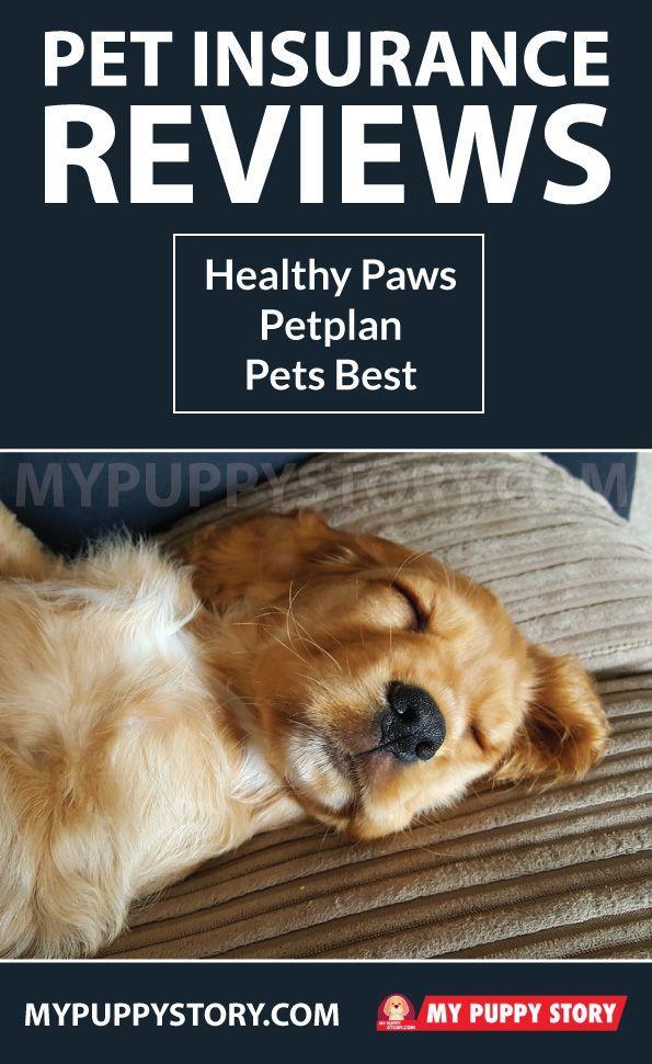 Pet Insurance Reviews Healthy Paws Petplan Pets Best Pet Insurance Reviews Pet Insurance Dog Insurance