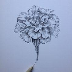 Image result for carnation outline tattoo