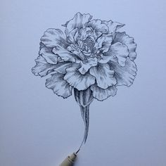 25 best ideas about carnation tattoo on pinterest for Birth flower october tattoo