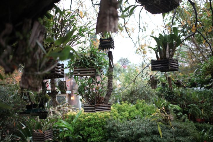 Hanging orchids in Buenos Aires; Gardenista