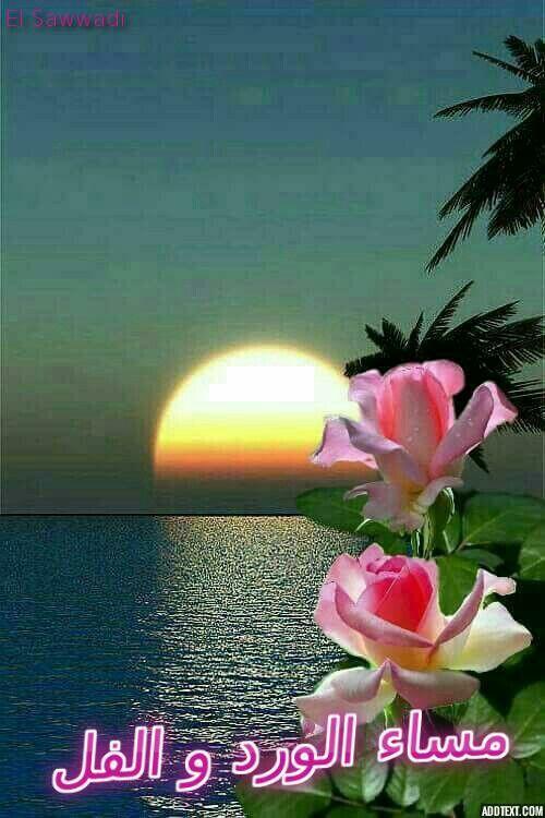 Single Quotes Hd Wallpaper 28 Best مساء الورد Images On Pinterest Bloemen Blossoms