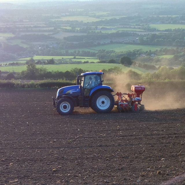 September seeding in the evening sun. we plough and reseed our fields every few years to control weeds and establish clover. To create a good seedbed needs the right combination of sunshine and showers. This year has been about right, with a fine seedbed and plenty of dust following the seed drill