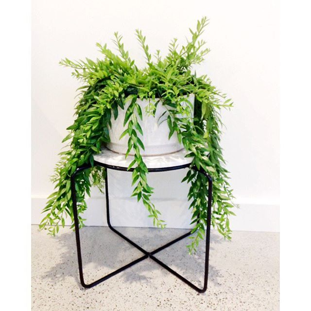 Ivy Muse 'Quay' in Black plant stand. theguideonline.com.au
