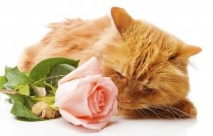 There are many poisons that are especially common around Valentine's Day, including flowers and chocolate, that are toxic to your pet!