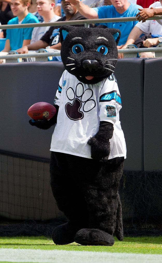 Look, stop whatever it is you're doing and check out the Carolina Panthers' mascot. | We Need To Talk About Sir Purr, The Carolina Panthers Mascot