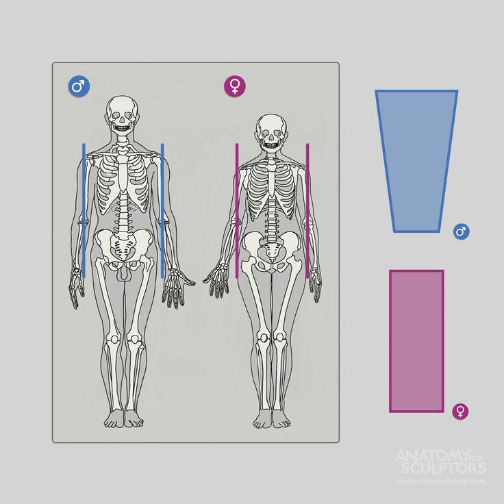 Human body - Wikipedia