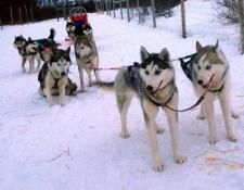 Help with outdoor-work at our husky kennel - workaway.info