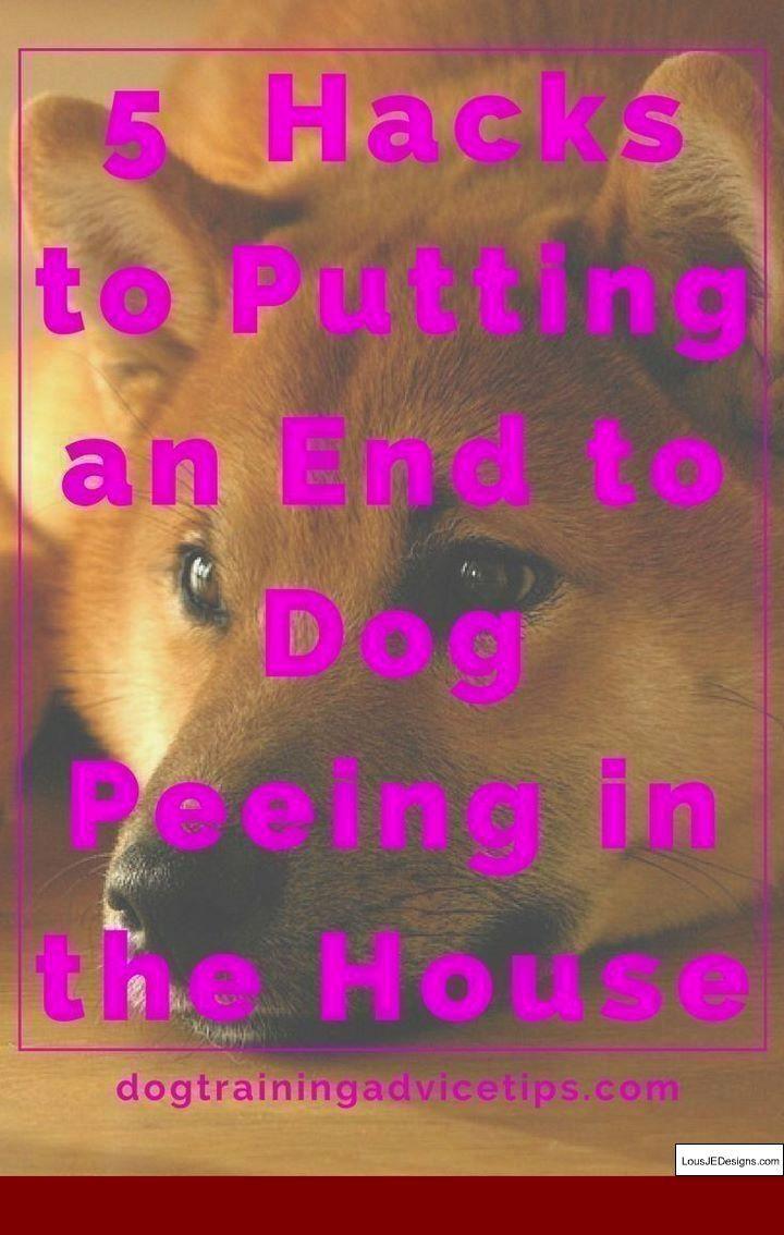 Dog Training Tips Dogtrainingtips Dog Pee Dog Training Dog