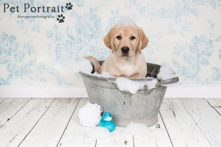 Hondenfotograaf Leiden - Labrador retriever pup Freyja-8