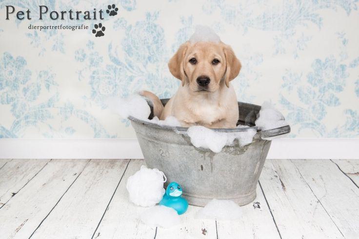 Hondenfotograaf Leiden - Labrador retriever pup Freyja - Leuke alternatieven voor het laten zien van je foto's