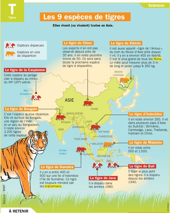 Fiche exposés : Les 9 espèces de tigres
