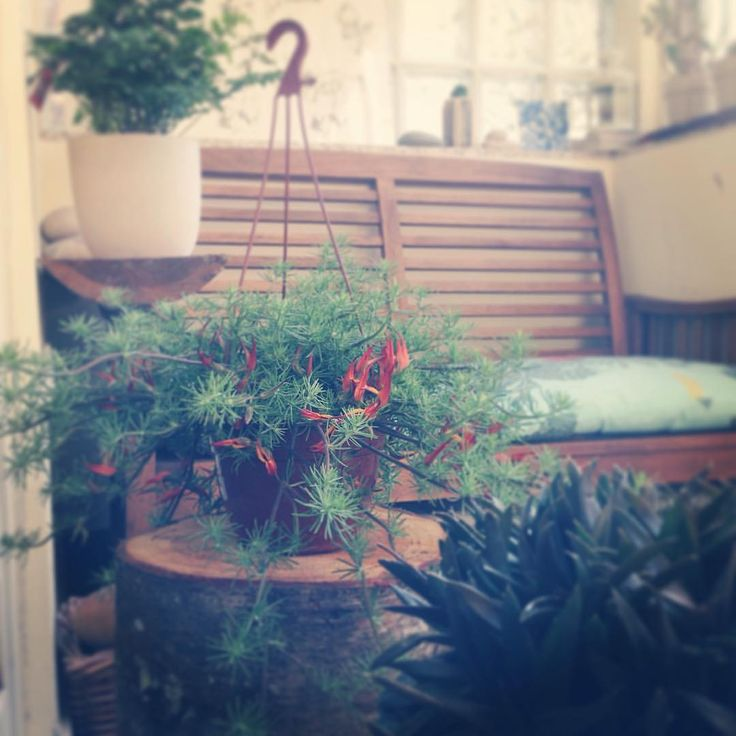 "42 Gostos, 2 Comentários - Lara Mafalda | myBelovedCraft (@laramafalda) no Instagram: ""Plant hunter."""